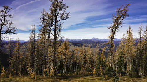 trees canada mountains landscape outdoors golden scenery bc hiking larches hopebc