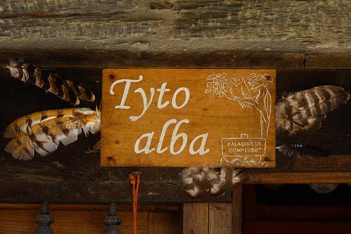 Tyto Alba El Bierzo
