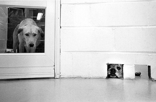 Jill Freedman, At the Dog Hotel, New York City, 1976
