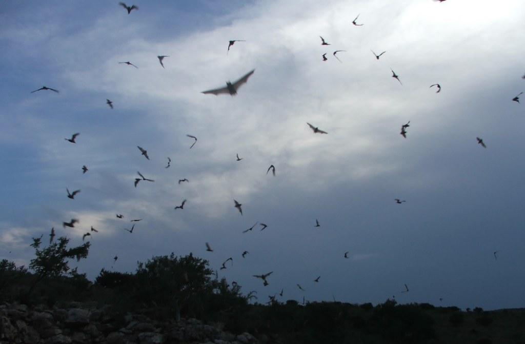 Murciélagos volando en grupo. Autor, Dizfunkshinal