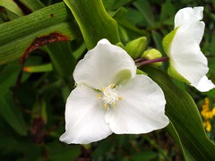 white-flowers-04-color-enhanced