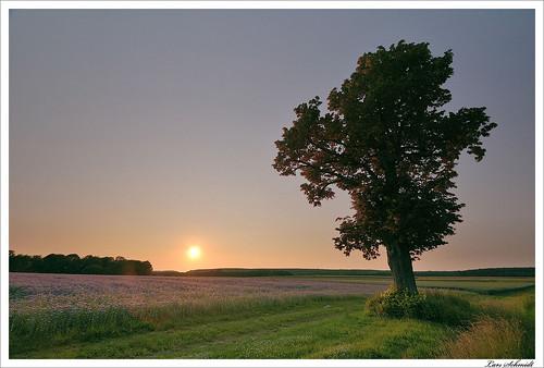 sunset sky tree nature landscape sonnenuntergang natur himmel landschaft baum hitech eichsfeld ndgrad 09reverse tamron1024mmf3545spdiiildaslif