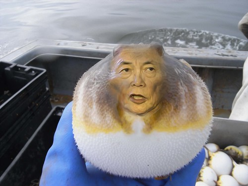 STRANGE MUTATED BLOWFISH RESEMBLES FINANCE MINISTER TARO ASO by WilliamBanzai7/Colonel Flick
