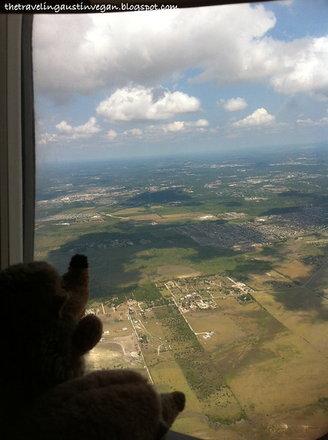 Hedgehogs On A Plane 3