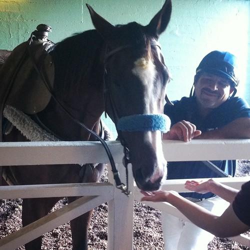 I got to pet a horse!!!!