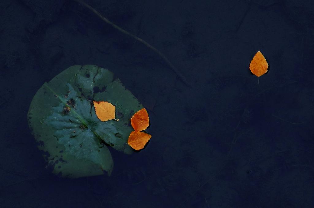 Autumn Colors In Vilas Park Lagoon >> Autumn Comes To The Vilas Park Lagoon Vilas Park Madison