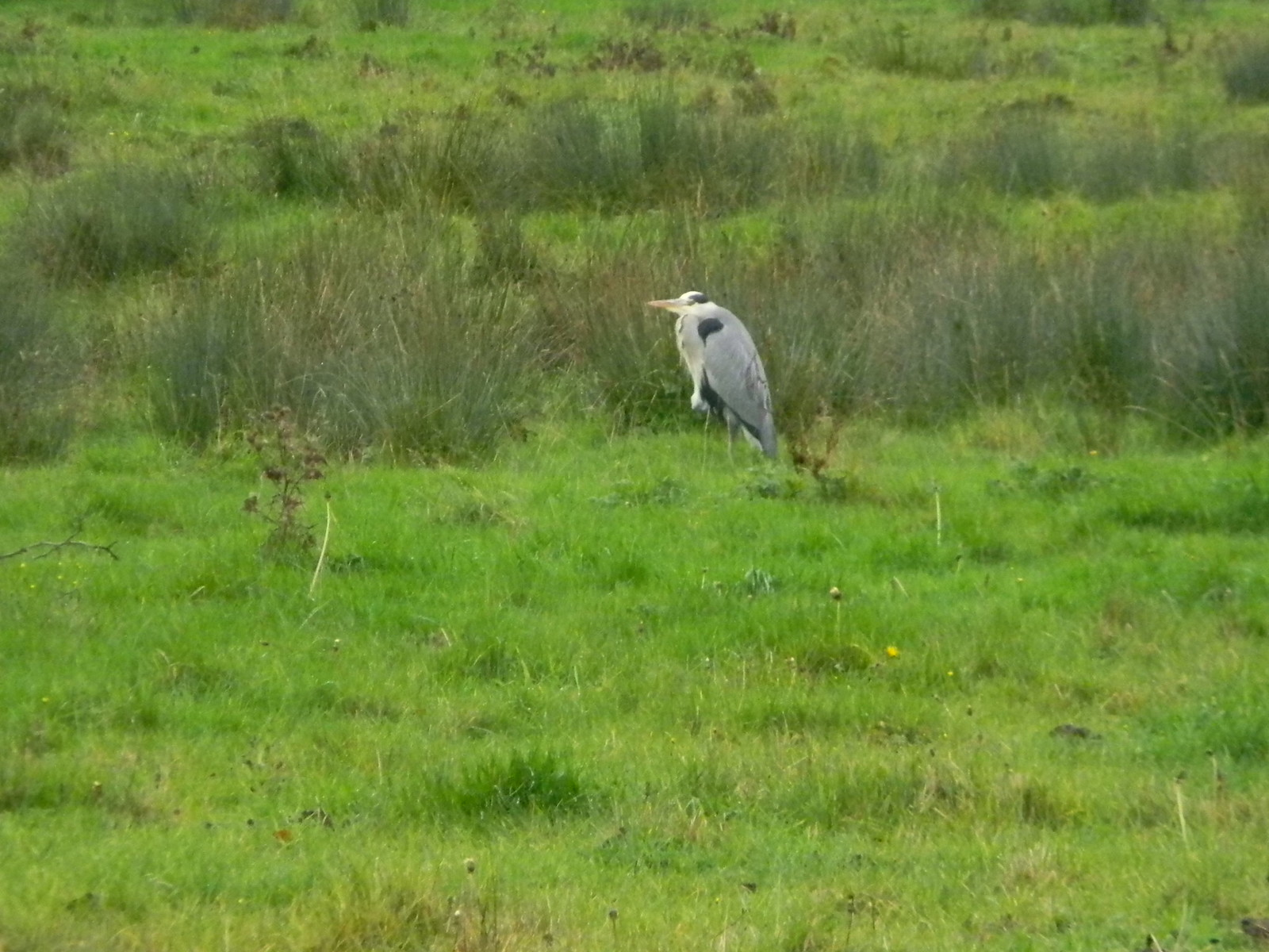 Heron Chorleywood to Chesham