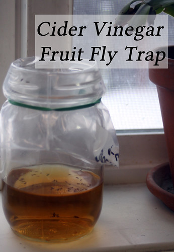 Cider Vinegar Fruit Fly Traps | Homespun Seasonal Living