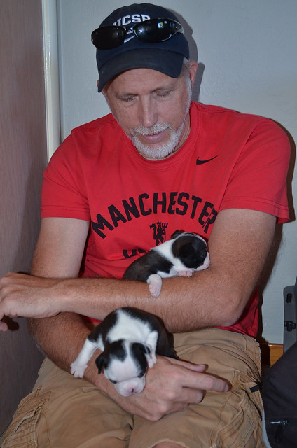 A man holding a Boston Terrier puppy.