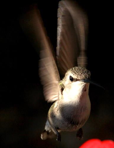 143177-1.jpg by Robert W Gilcrease