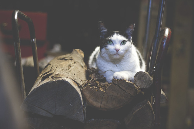 cat by the woodstove 2