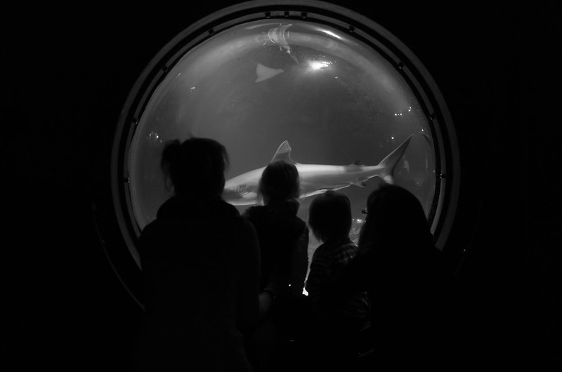 Shark - Day 113/365