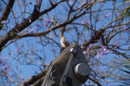 124 Vogel in parkje bij cementerio de la recoletta