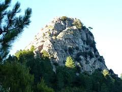 La Punta di u Castellacciu et sa face SE avec la voie initiale d'ascension par la vire et le ressaut entre les deux gros arbres