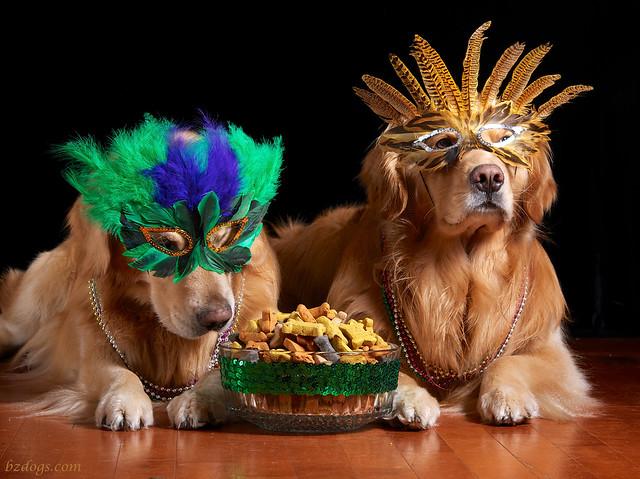 Canine Mardi Gras