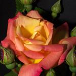 Bloomin luverley