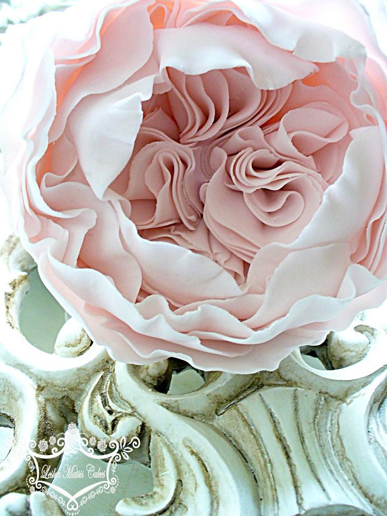 Leslea Matsis Cakes S Most Recent Flickr Photos Picssr