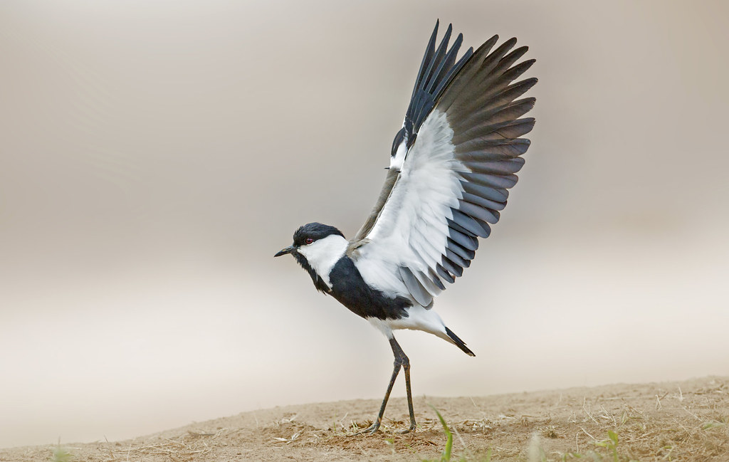 Samburu Reserve. Kenya