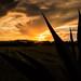 Sunset Grill por genkideku