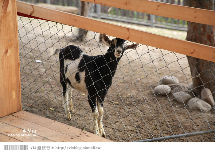 【彰化景點】克林姆莊園Cream Manor~小型動物園!戶外親子同遊好去處17