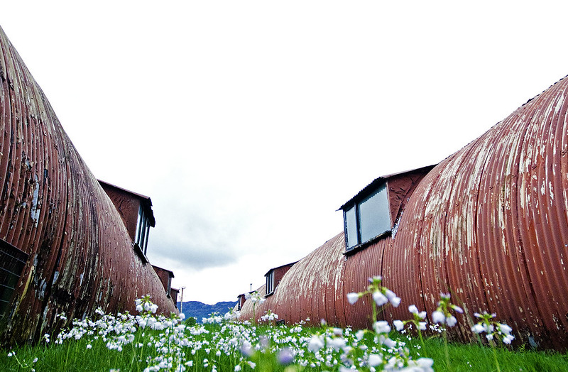 Flowers between huts