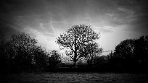 ireland blackandwhite tree monochrome grass canon raw kerry icy tralee blackandwhitephotography 2015 ardfert telegraphtuesday