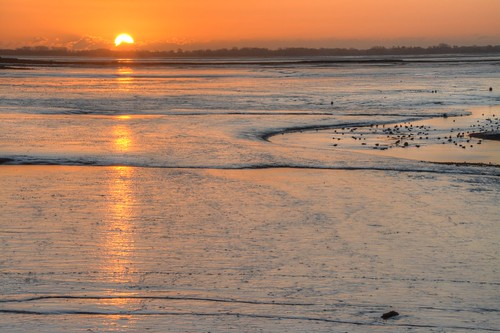 orange reflection birds sunrise sand nikon hampshire mudflats waders farlingtonmarshes