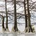 Frozen Lake by paulawalla37