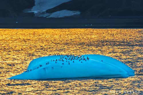 antarctica deceptionisland chinstrappenguins bailyhead jamesneeley