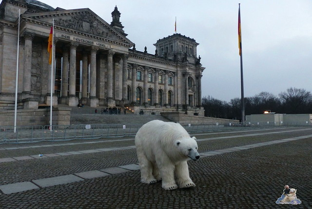 Eisbär, Polar Bear Ralph, Fortitude Berlin 12.02.201529