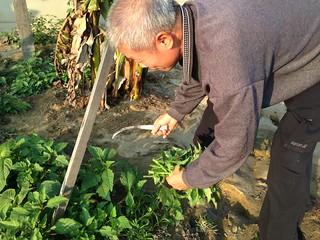 許乎忠具有農學院學位,並將所學應用在自己的農地。