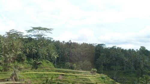 Bali-2-071