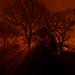 Fiery Trees by Jemmaeg