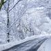 Winter Road by dandi723