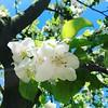 Looking up. #Blue #projektgarten #gardening #ruhryork #apfelblüte #parzelle15