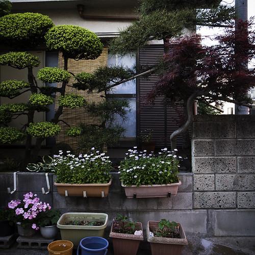 Zen Garden Hood in the Afternoon