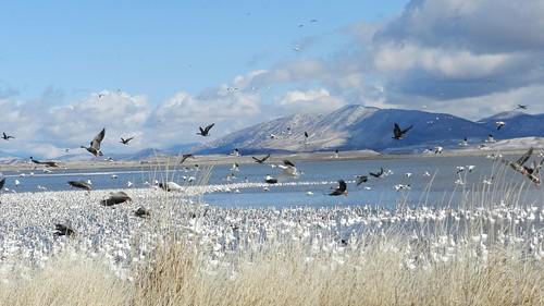 klamath birds