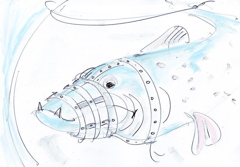 Fisch24