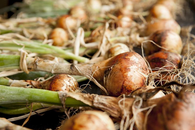 Weekly HarvestIMG_4081