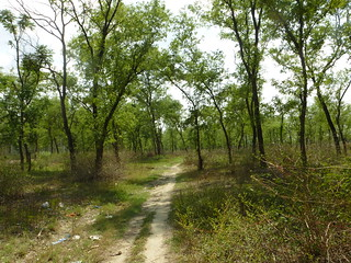 One village's forest, one company's scrub