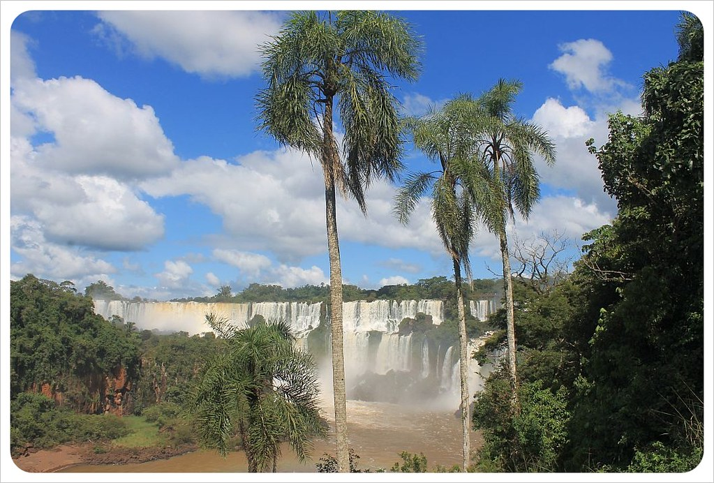 iguazu falls with palm trees