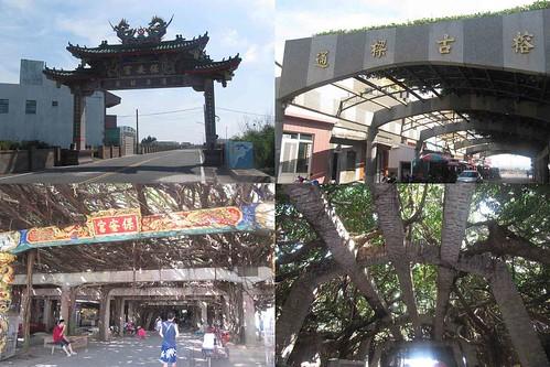 01-2013澎湖-通樑古榕