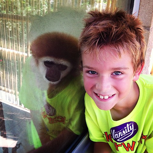 This looks like the monkey has on Beckham's shirt!! #sunsetzoo