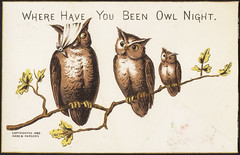 Where have you been owl night. [front]