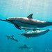 Dolphins + a baby by TaikiSan