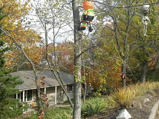 Halloween Trees - Cliff