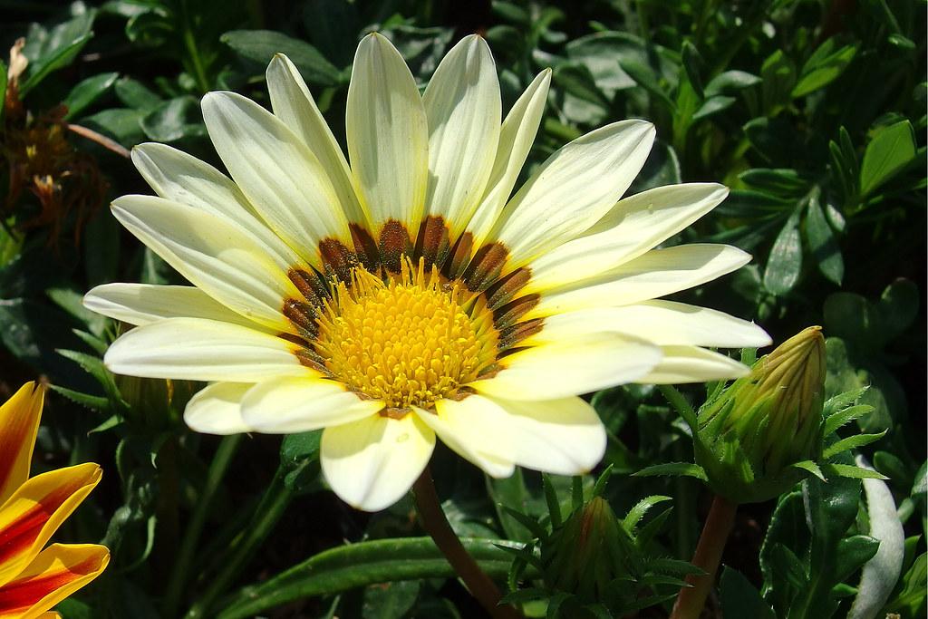 花,微距 MX-1 [上]