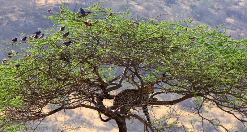 Parque Monte Kenya