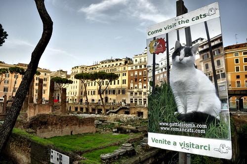 2014 Rome, Torre Argentina Cat Sanctuary