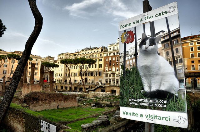 2014 Rome, Torre Argentina Cat Sanctuary